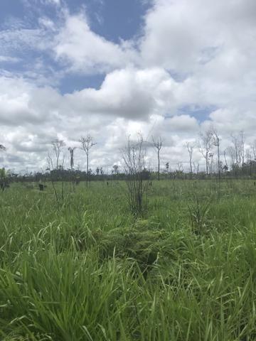 Vendo área de fazenda na Br 319 AM próximo a Porto Velho/Ro - Foto 10