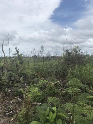 Vendo área de fazenda na Br 319 AM próximo a Porto Velho/Ro - Foto 16