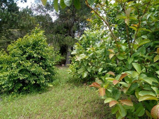 Chácara Linda na Fazenda Rio Grande PR - Foto 5