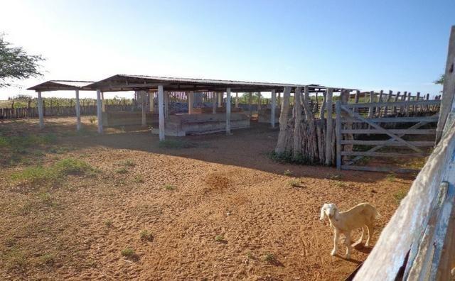 Fazenda Fernando Pedrosa, 489 Hectares, Escriturada, 7km Rio Pajeú, Açude, Casa Sede - Foto 10