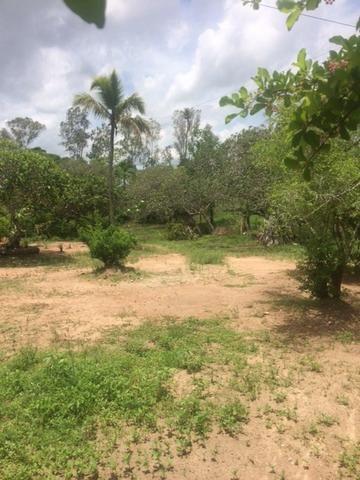 Fazenda-Granja-Sítio-Chácara 12 Hectares Aliança, Aceito Imóvel ou Automóvel - Foto 9