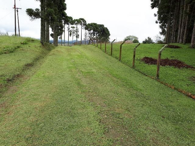 Chácara Tijucas do Sul (Tabatinga) - Foto 14