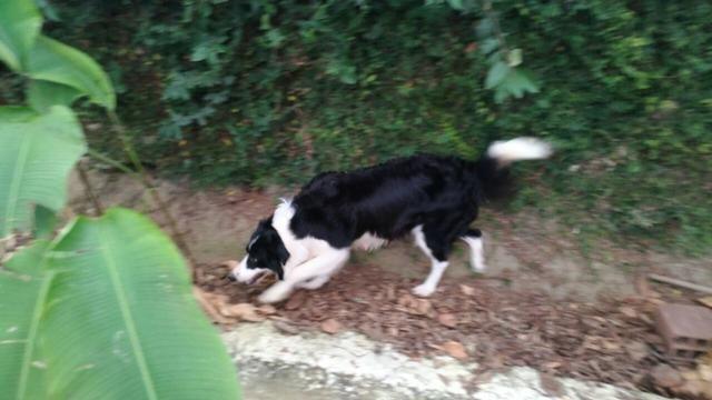Adestramento Canino! adestramos seu cão - Foto 2