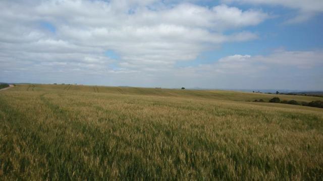 580 Hectares - 240 Alqueires - Fazenda Sede - Lapa - Foto 14