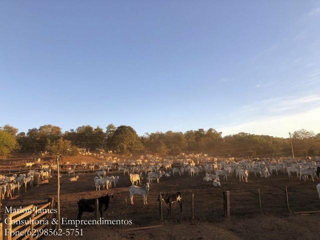 Fazenda em Porangatu!! - Foto 12