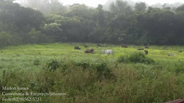 Fazenda em Porangatu!! - Foto 11