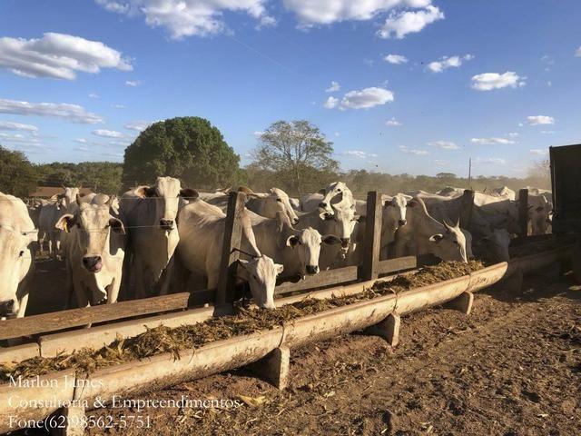 Fazenda em Porangatu!! - Foto 4