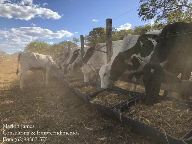 Fazenda em Porangatu!! - Foto 2
