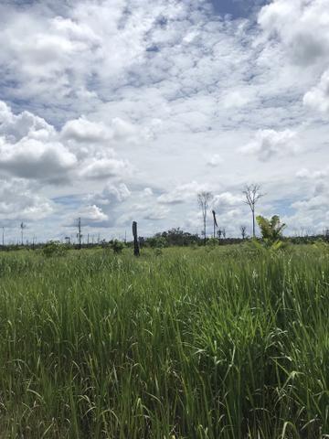 Vendo área de fazenda na Br 319 AM próximo a Porto Velho/Ro - Foto 17