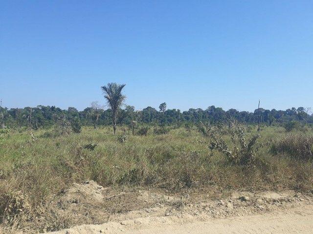 Vendo area de 248 hectareas