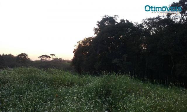 Área à venda, colônia zacarias, são josé dos pinhais - ar0002. - Foto 9