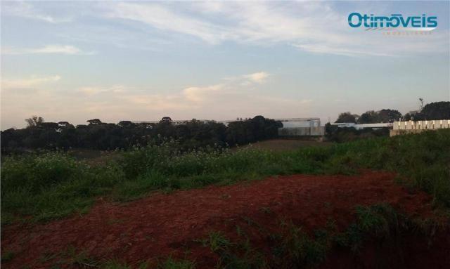 Área à venda, colônia zacarias, são josé dos pinhais - ar0002. - Foto 13