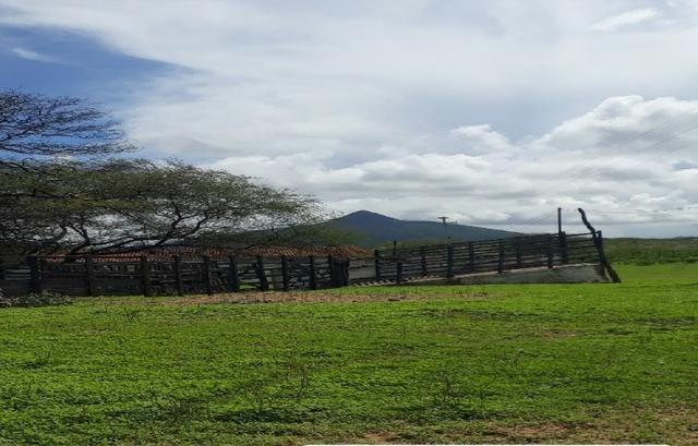 Fazenda Fernando Pedrosa, 489 Hectares, Escriturada, 7km Rio Pajeú, Açude, Casa Sede - Foto 9
