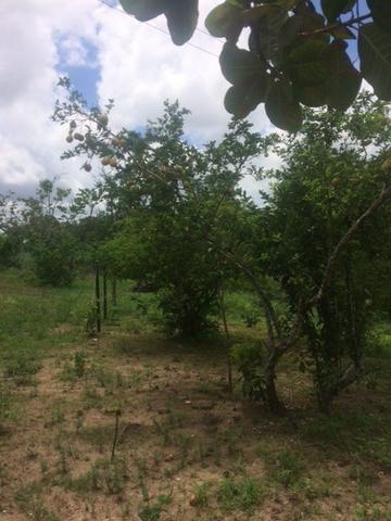 Fazenda-Granja-Sítio-Chácara 12 Hectares Aliança, Aceito Imóvel ou Automóvel - Foto 8