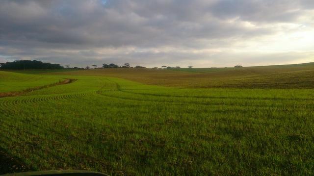 580 Hectares - 240 Alqueires - Fazenda Sede - Lapa - Foto 11