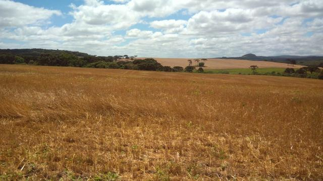 580 Hectares - 240 Alqueires - Fazenda Sede - Lapa - Foto 3