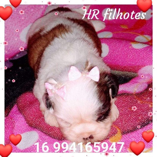 Linda bebê de Shih tzu fêmea disponível para reserva, com Pedigree e Microchip - Foto 2