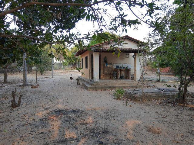 Sitio em Codó-Ma - Foto 7