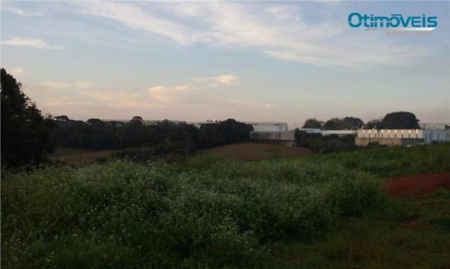 Área à venda, colônia zacarias, são josé dos pinhais - ar0002. - Foto 2