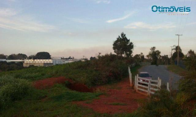 Área à venda, colônia zacarias, são josé dos pinhais - ar0002. - Foto 4
