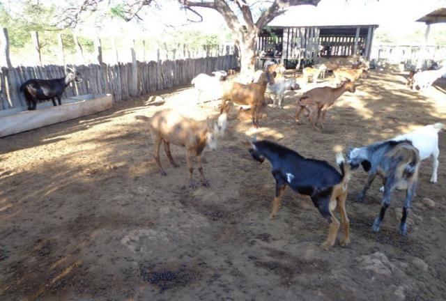 Fazenda Fernando Pedrosa, 489 Hectares, Escriturada, 7km Rio Pajeú, Açude, Casa Sede - Foto 4