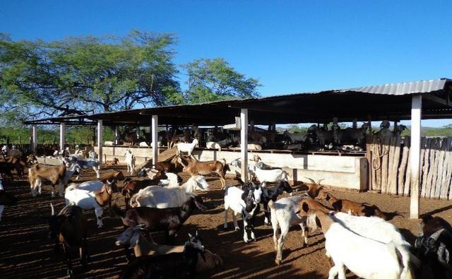 Fazenda Fernando Pedrosa, 489 Hectares, Escriturada, 7km Rio Pajeú, Açude, Casa Sede - Foto 2