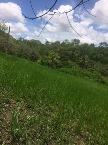 Fazenda-Granja-Sítio-Chácara 12 Hectares Aliança, Aceito Imóvel ou Automóvel - Foto 13