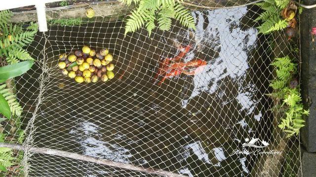Jordão corretores - Fazendinha leiteira Cachoeiras de Macacu - Foto 13