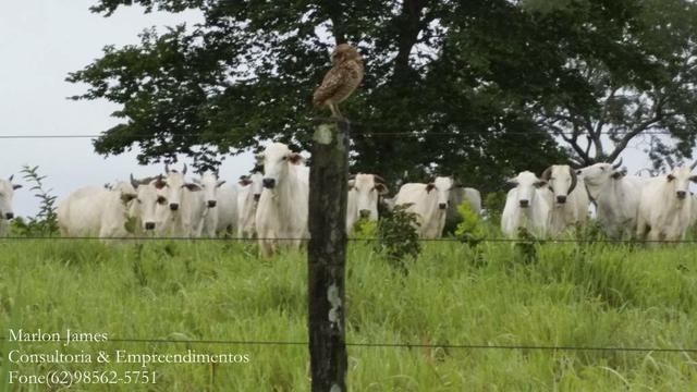 Fazenda em Porangatu!! - Foto 14