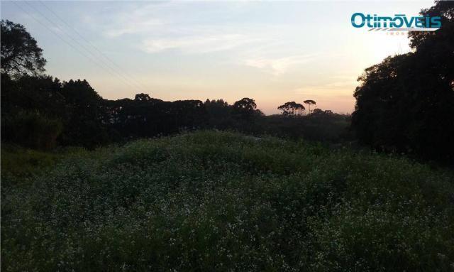 Área à venda, colônia zacarias, são josé dos pinhais - ar0002. - Foto 7
