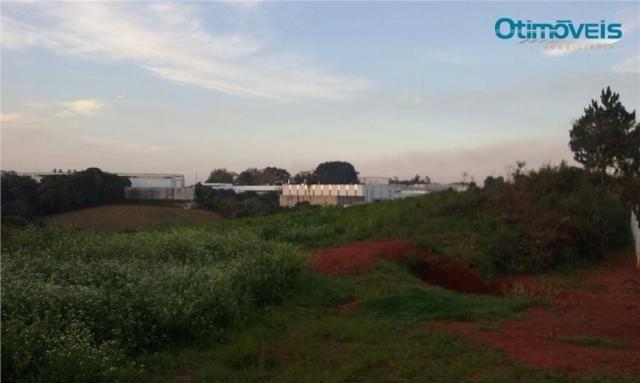 Área à venda, colônia zacarias, são josé dos pinhais - ar0002. - Foto 5