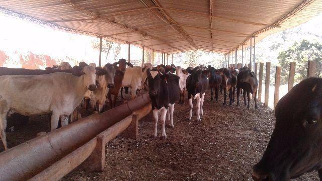 Fazenda 80 Ha Pitangui
