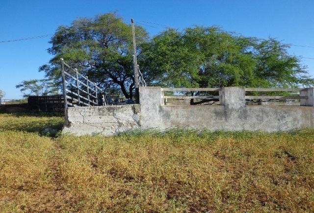 Fazenda Fernando Pedrosa, 489 Hectares, Escriturada, 7km Rio Pajeú, Açude, Casa Sede - Foto 19