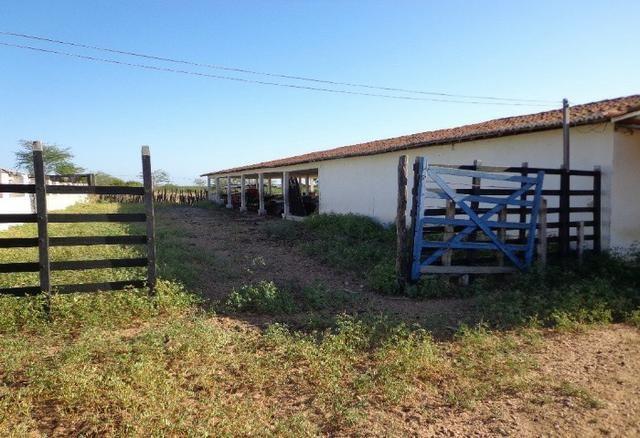 Fazenda Fernando Pedrosa, 489 Hectares, Escriturada, 7km Rio Pajeú, Açude, Casa Sede - Foto 15