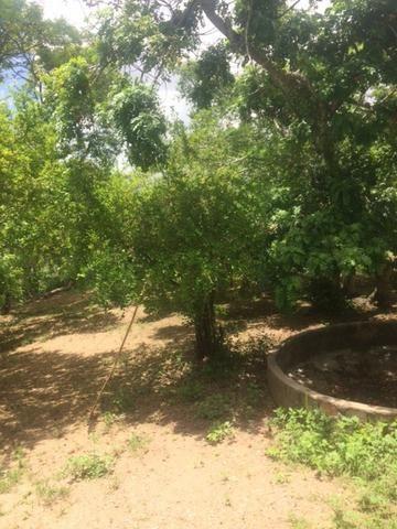 Fazenda-Granja-Sítio-Chácara 12 Hectares Aliança, Aceito Imóvel ou Automóvel - Foto 6