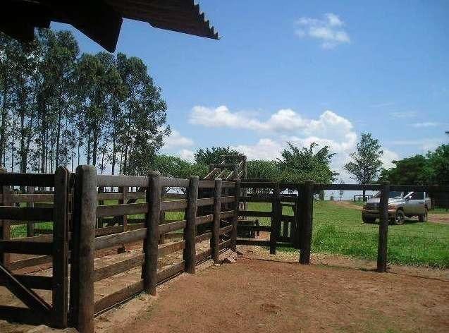 580 Hectares - 240 Alqueires - Fazenda Sede - Lapa - Foto 13