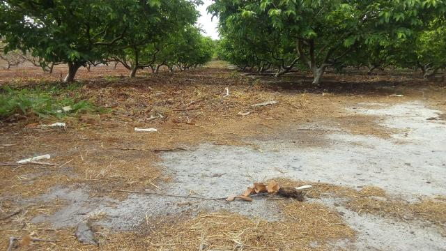 16 Ha irrigado Baixa Acaraú próximo do Marco - Foto 3