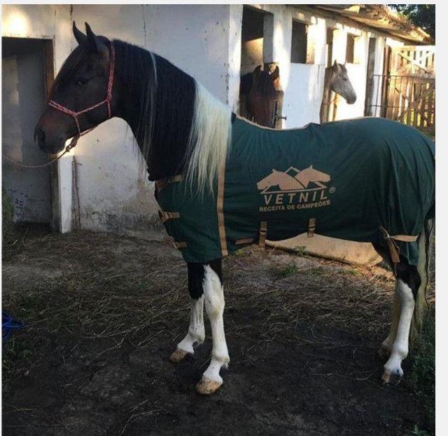 Capa para cavalo, Vetnil - Foto 4