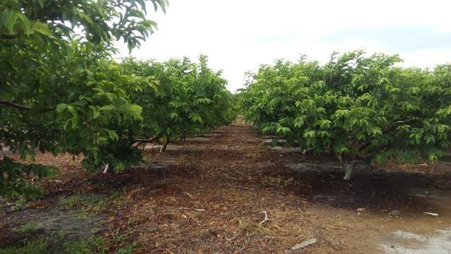 16 Ha irrigado Baixa Acaraú próximo do Marco - Foto 4