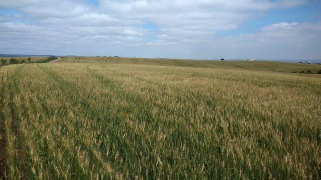 580 Hectares - 240 Alqueires - Fazenda Sede - Lapa - Foto 15