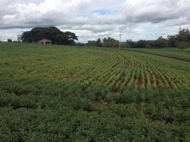234 Hectares - 97 Alqueires - Planta 52 Alqueires - Palmeira - Foto 10
