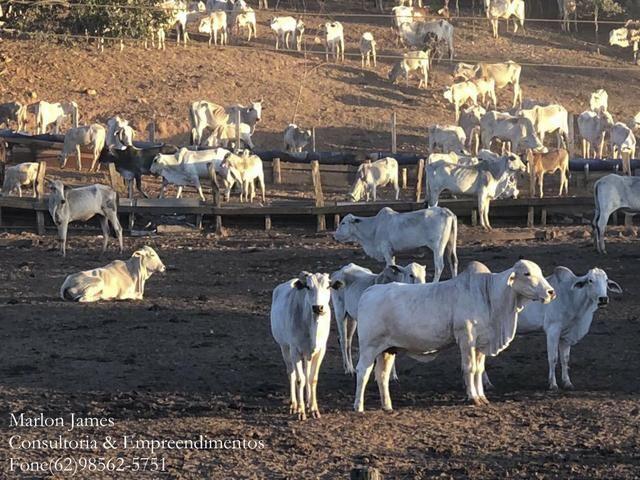 Fazenda em Porangatu!! - Foto 6