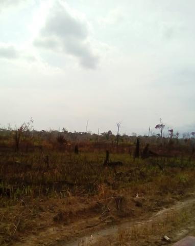 Vendo área de fazenda na Br 319 AM próximo a Porto Velho/Ro - Foto 5