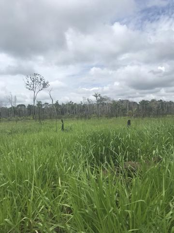 Vendo área de fazenda na Br 319 AM próximo a Porto Velho/Ro - Foto 11