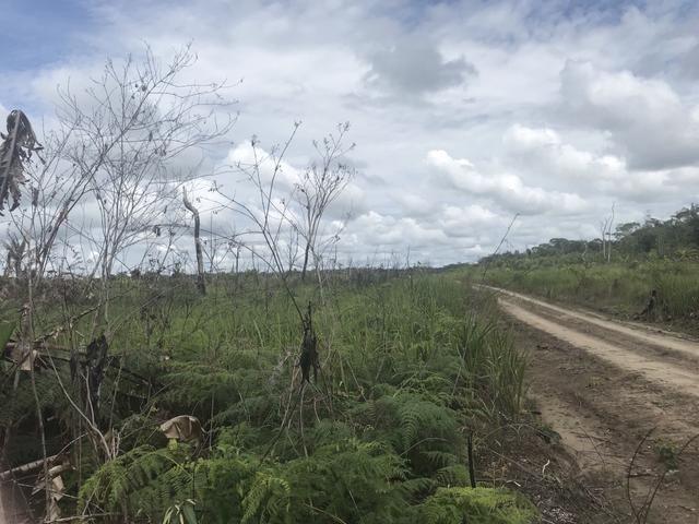 Vendo área de fazenda na Br 319 AM próximo a Porto Velho/Ro - Foto 18