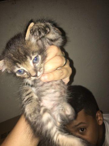 Gato doação - Foto 2