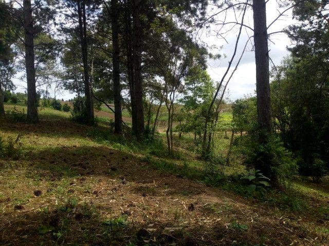 Chácara Linda na Fazenda Rio Grande PR - Foto 6