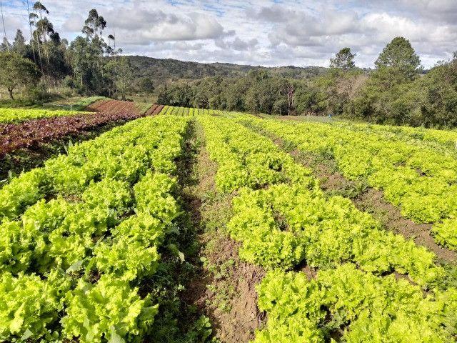 Chácara Linda na Fazenda Rio Grande PR - Foto 7