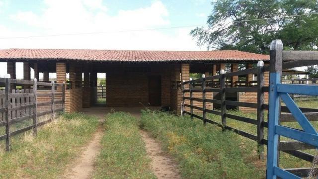 Fazenda Fernando Pedrosa, 489 Hectares, Escriturada, 7km Rio Pajeú, Açude, Casa Sede - Foto 17