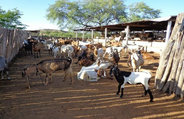 Fazenda Fernando Pedrosa, 489 Hectares, Escriturada, 7km Rio Pajeú, Açude, Casa Sede - Foto 7